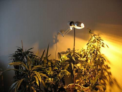 Комнатные растения под лампой