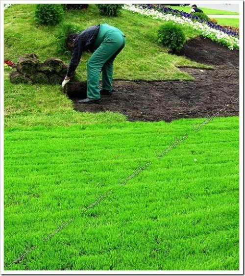Устройство рулонного газона: обеспечиваем беспроблемный рост