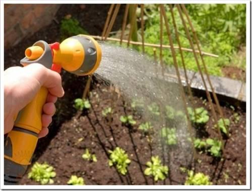 Как часто необходимо поливать огород?